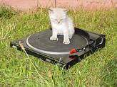 historias de gatos y gatitos