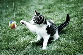 un gatito jugando