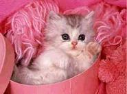 quiero gatito