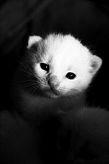 gato recién nacido mirando
