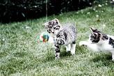 dos gatitos jugandan