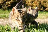 gatitos en el césped