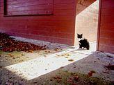 gato en el sol